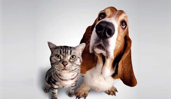 mascotas y alarmas